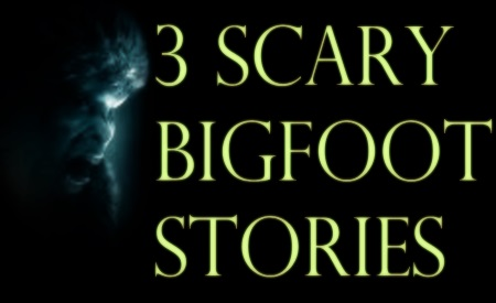 3 Scary Bigfoot Stories WB