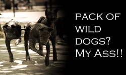 Pack OF Wild dogs my ass_w