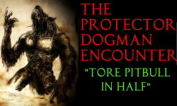 THE PROTECTOR DOGMAN ENCOUTNERptbull_WB